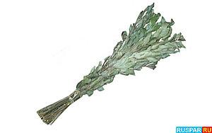 Ясеневый веник для бани